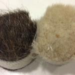 Plastering Hair, Hessian & Mesh