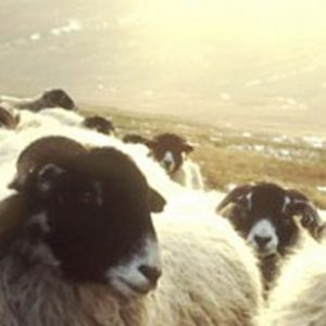 Sheep's Wool, Hemp & Supaloft
